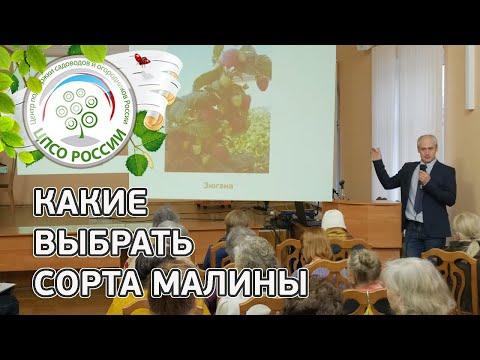 Сорта малины. Обзор сортов малины. | ремонтантные | выращивание | карамелька | казакову | подарок | агроном | россии | поклон | огород | малины