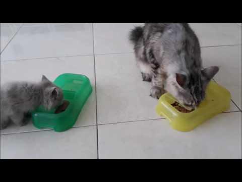 Pentingnya Untuk Memberikan Makanan Basah Untuk Kucing