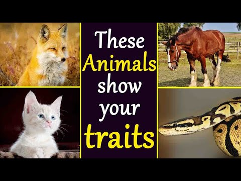 Zodiac Signs: Know About Animal That Your Soul Relates To, Reveals Your PERSONALITY Traits | Boldsky