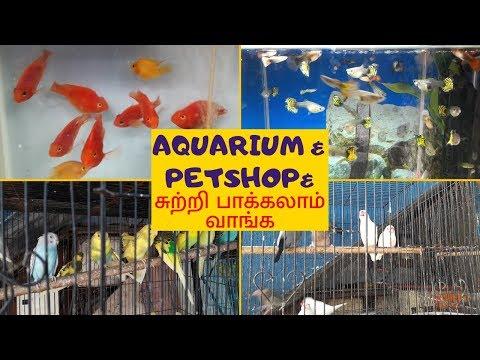 Aquarium Fish Types And Names | Vasthu Fish Details In Tamil | Fish Tank Benefits At Home