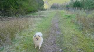 A New Life For Wolfie (pomeranian)