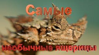 Топ 10 самых необычных ящериц в мире
