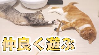 cute cats playing on the floor together