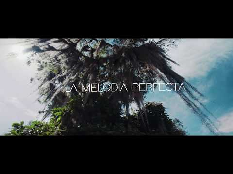 La Melodía Perfecta Video Oficial ¿Qué Pasa?