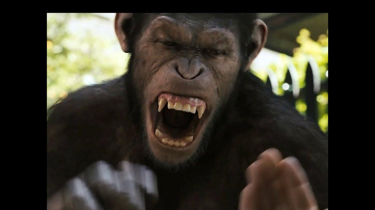 Planet Der Affen 1