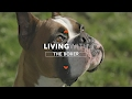 ALL ABOUT LIVING WITH BOXER DOGS mp3