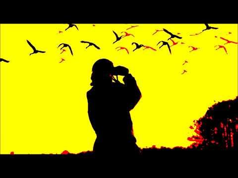 TIếng Anh Online: Unit 4 - Bird Watching
