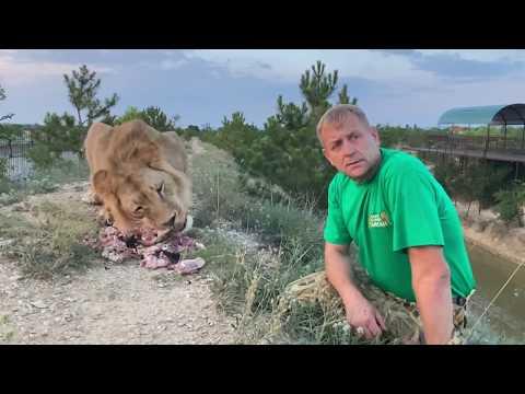 Как лев Султан чуть не СТОЛКНУЛ НАС В ОВРАГ !  Russian Lion man !