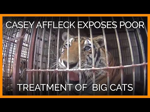 Casey Affleck Exposes How Big Cats Are Dragged and Hit With Sticks in the Circus