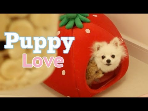 Puppy Love in a Strawberry