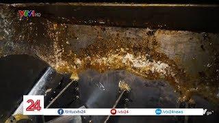 Cáu bẩn, nấm mốc, phân động vật trong cơ sở sản xuất bánh kẹo siêu bẩn tại La Phù   VTV24