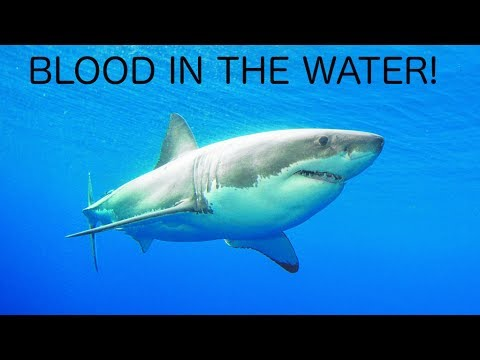 Are Most Shark Attacks Caused by Women on Their Periods?