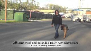 "18-month Old ""diesel"" Before/after Video!  German Shepherd Training, Northern Virginia"