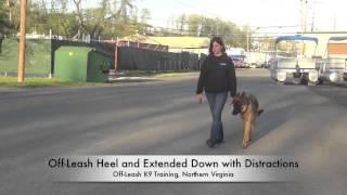 """18-month Old """"diesel"""" Before/after Video!  German Shepherd Training, Northern Virginia"""