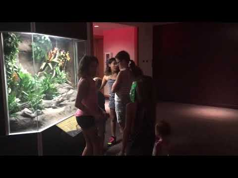 Museum of the Rockies video 1