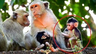Great Barbi Newborn Baby Monkey, Blacky Start Let's Barbi Walking!