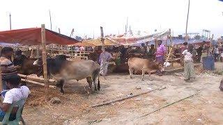 ক্রেতা সমাগম বাড়ার সঙ্গে সঙ্গে বেড়েছে পশু বিক্রি! | Cow Hat In BD