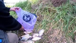 Рыбалка на карася и карпа Закрытие летнего сезона 1