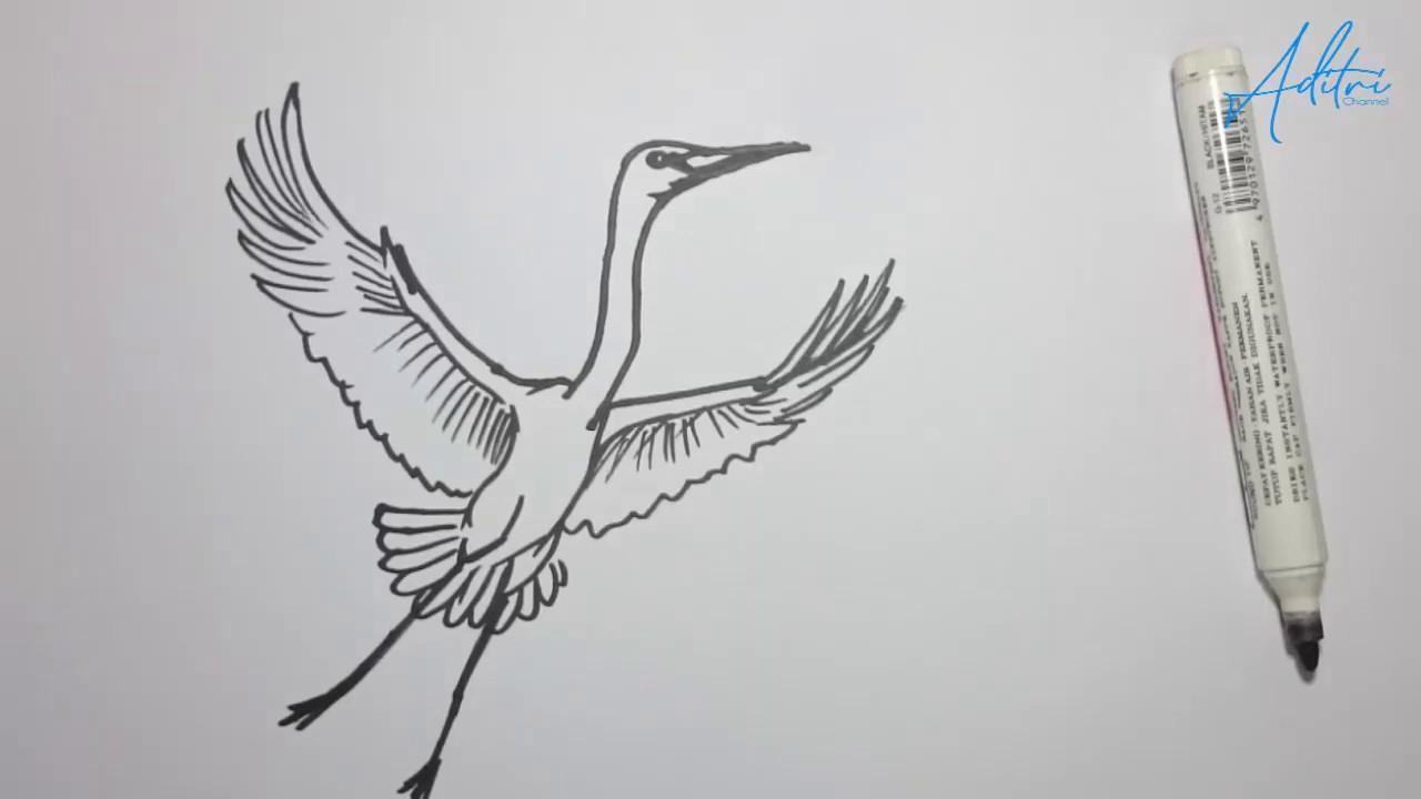 Cara Menggambar Burung Bangau Terbang Youtube