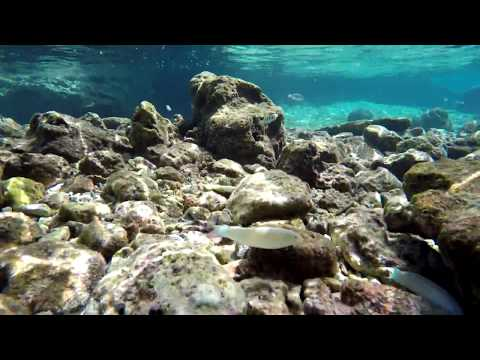 NIUE ISLAND MAY 2017. Snorkeling Limu Pools