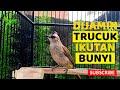 Trucuk Manapun Bakalan Respon Nyaut Dan Gacor Ikutan Ropel Garuda Ngeroll  Mp3 - Mp4 Download