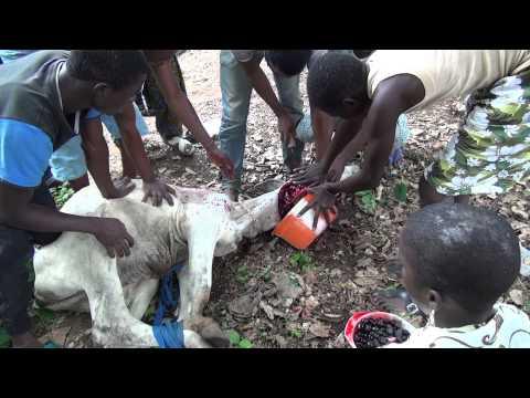 Ifa Gbigbo (2 of 2)