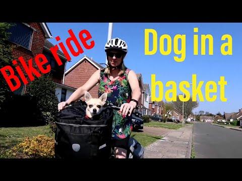 Dog in a basket / Bike ride Easter Sunday