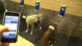 Crate training multiple dogs with PT
