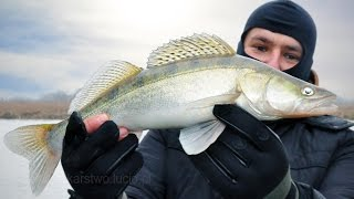 Zander on the side strap, pike and control the PSR - fishing Spinning