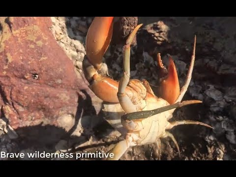 primitive technology :catch the most unique giant crab - Cooking crab recipe - Eating delicious