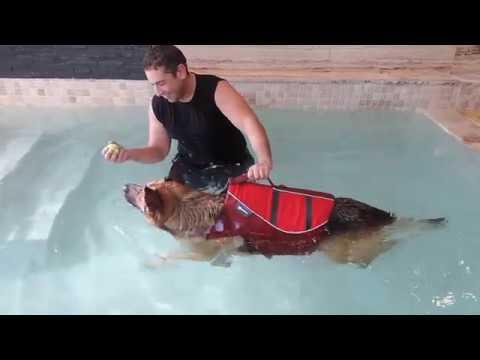 Beneficios de la hidroterapia en animales piscina para for Piscina para perros madrid