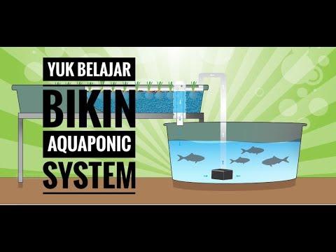 aquaponic belajar akuaponik