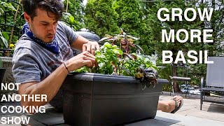 GROW THE MOST BASIL you ever have with this 1 EASY GARDEN HACK