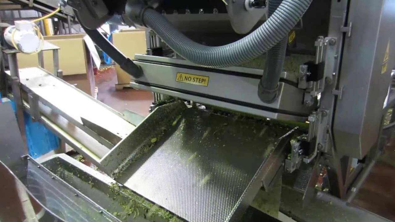 Zucchini sorting machine Genius - TOMRA Sorting