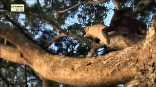 Die Anfänge Der Menschheit 1 3 Vom Affen Zum Mensch Doku