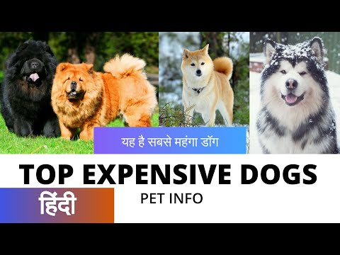Top 5 Expensive Dogs in India | Pet INFO | Dog Facts