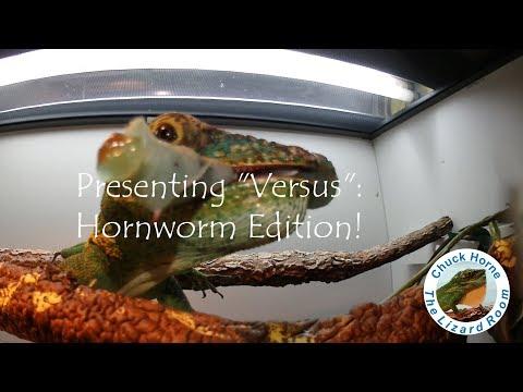 For your enjoyment a Hornworm feeding montage!