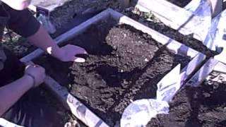 Planting elephant ears and Caladium bulbs