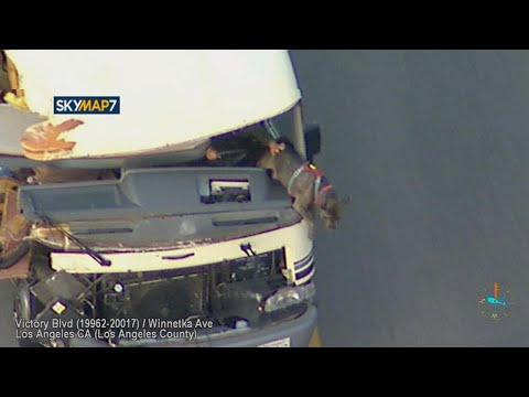 Dog jumps out of moving vehicle, suspect detained after high-speed RV chase in LA