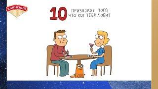 10 признаков того, что кот тебя любит!