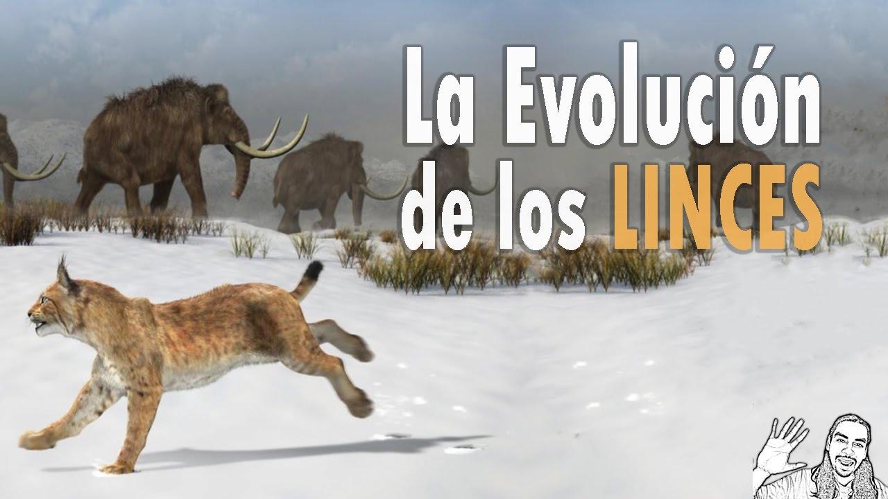 La Evolución del Lince | #AbrilVideosMil | 07