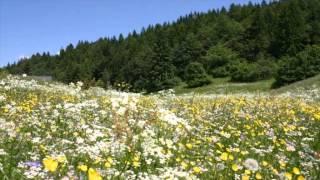 Lucio Belviso - Fraseggio di Primavera / Il Mattino