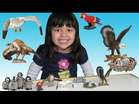 Learn Animals For Kids Bald Eagle and other Birds with Schleich Safari Animal Toys