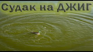 Нашли Судака и Окуня Рыбалка в Казахстане на спиннинг 2021 Август