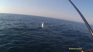 Рыбалка в Крыму на Черном море ласкирь горбыль