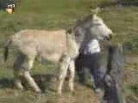 Donkey Drilling