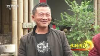 《生财有道》 20201230 生态中国乡村行——四川绵阳安州区:农旅巧融合 乡村出美味  CCTV财经 - YouTube
