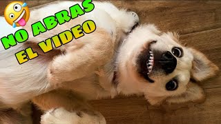 NO veas este VIDEO si no quieres REÍR  Intenta NO REÍR versión ANIMALES (DIFÍCIL)
