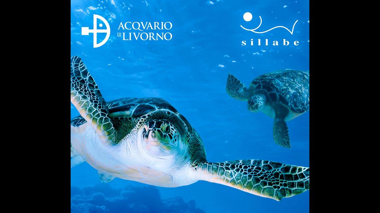 Acquario di Livorno riapre - YouTube
