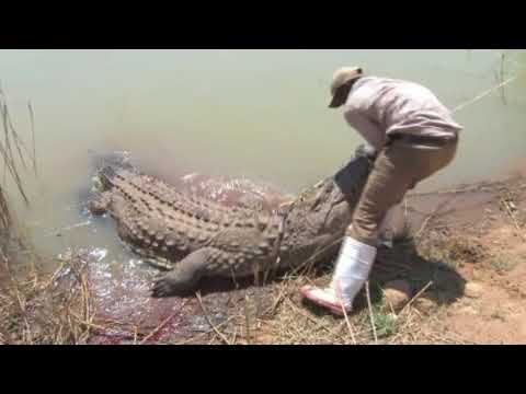 Mabula Pro Safaris   Trophy Nile crocodile hunt